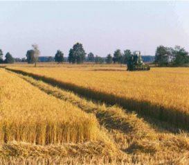 AGRICOLTURE